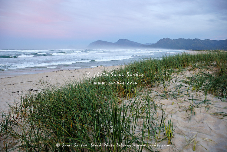 Grass on beach at dawn, Hermanus, South Africa