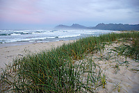 Grass on beach at dawn, Hermanus, South Africa