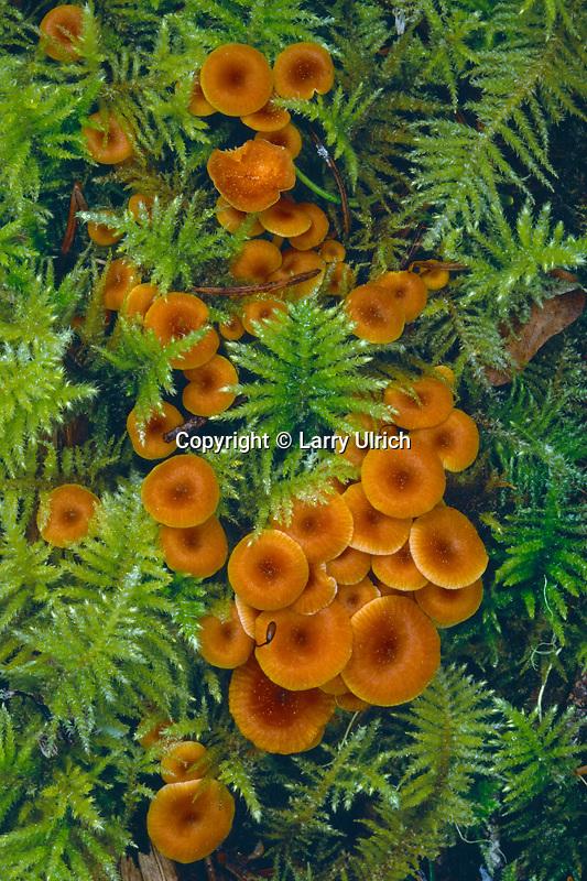 Mushrooms and mosses <br /> Umpqua National Forest<br /> Cascade Range<br /> Oregon