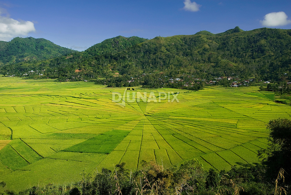 Wide view of spiderweb rice field, near Cancar, Manggarai, Flores.