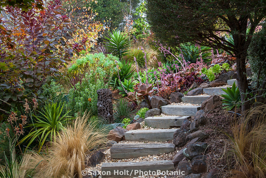 Stepping stair path through California summer-dry garden; Tiburon Hillside Garden