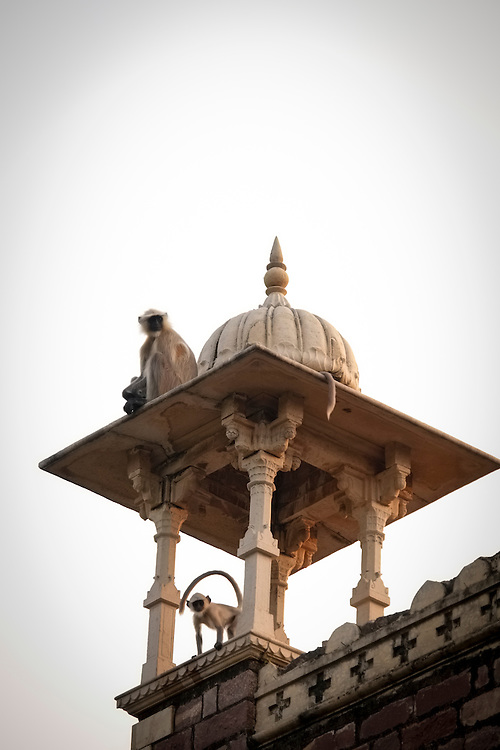 Monkeys hold lookout on the rooflines of Umed Bhawan Palace which built in 1901 and was the royal residence for the Maharaja Umed Singh II.