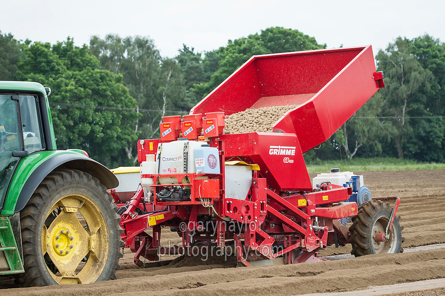 Planting Maris Peer potatoes into beds with a Grimme GB330 - Norfolk, June
