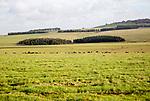 Rolling chalk upland landscape Figheldean Down, Salisbury Plain, Wiltshire, England, UK