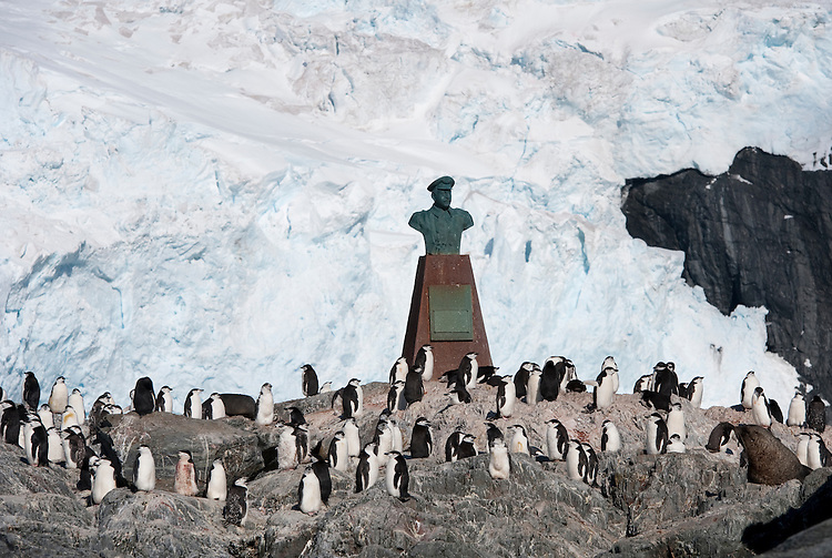 Colony of Chinstrap Penguin (Pygoscelis antarcticus) on Elephant Island around the memorial to Luis Pardo Villalón, the Chilean Captian of the Yelcho, which rescued Shackleton's men from Elephant Island, Antarctica