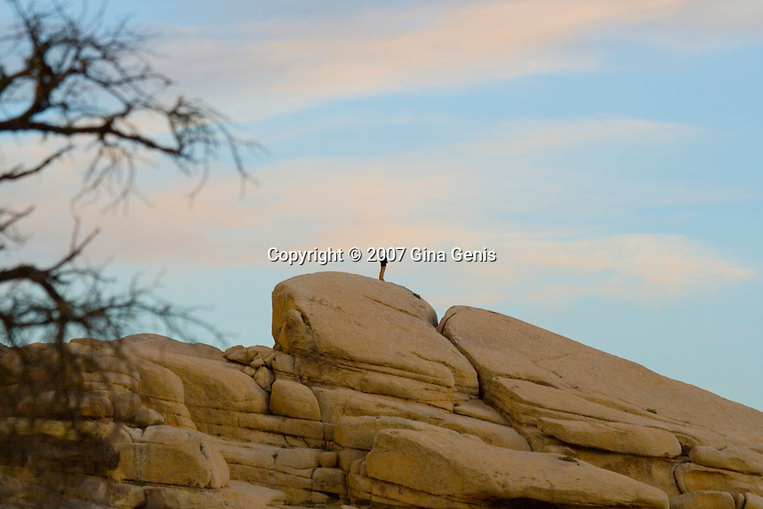 Man standing on a boulder at dusk in Joshua Tree National Park
