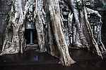 The roots of a massive tree have taken over a tempe at Ta Prohm in Angkor Thom, Cambodia. June 7, 2013.
