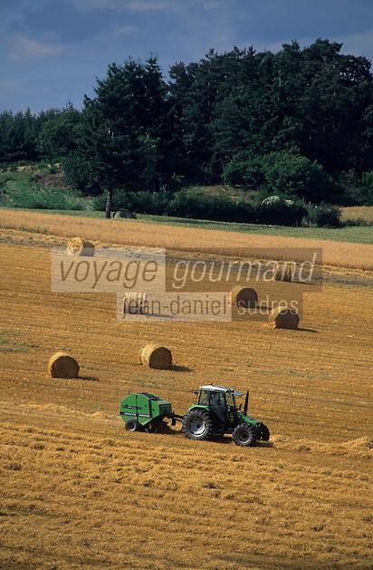 Europe/France/Rhône-Alpes/42/Loire/Massif du Forez/Env de Saint-Bonnet-le-Château : Champs de blé