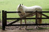 Horse in Anhem