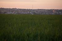 Frutal_MG, Brasil...Plantacao de cana-de-acucar em Frutal, Minas Gerais...The sugar cane agriculture in Frutal, Minas Gerais...Foto: LEO DRUMOND / NITRO