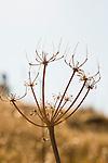 Plant Flora
