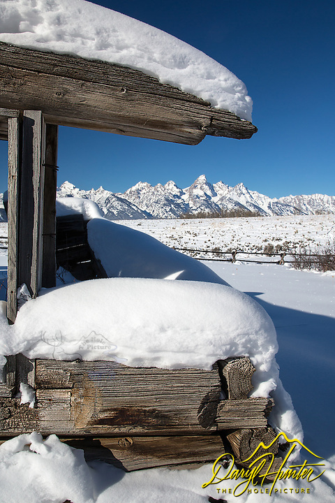 Some of the last remnants of the settlers of Jackson Hole.  This is the north end of the Shane Cabin, of the famous movie.