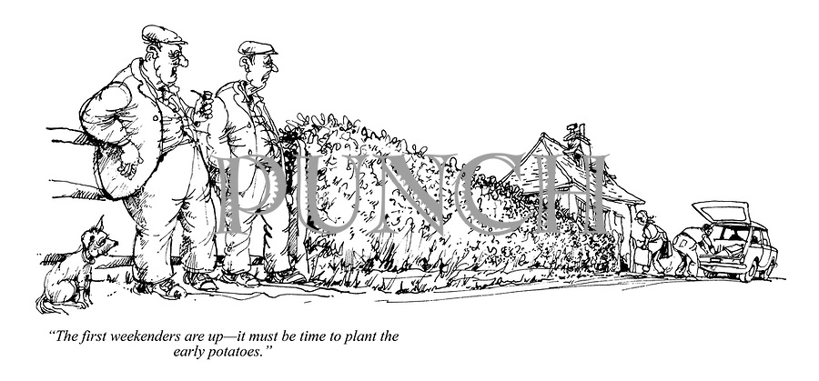 """The first weekenders are up - it must be time to plant the early potatoes."""