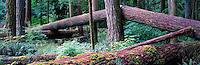 MacMillan Provincial Park, BC