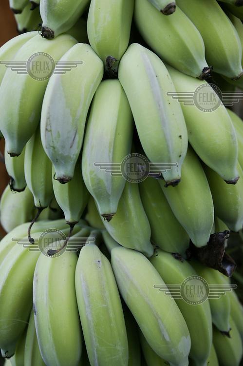 Bananas in the Kariba Lake area.