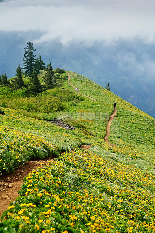 Hikers and balsamroot on Dog Mountain Trail, Columbia River Gorge National Scenic Area, Washington.