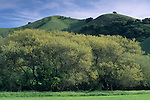 Green hills in spring along Foxen Canyon Road, near Santa Maria, Santa Barbara County, California