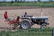 Ile D'Orleans, Quebec City Area, Canada, June 8, 1984. Farmers working in the fields.