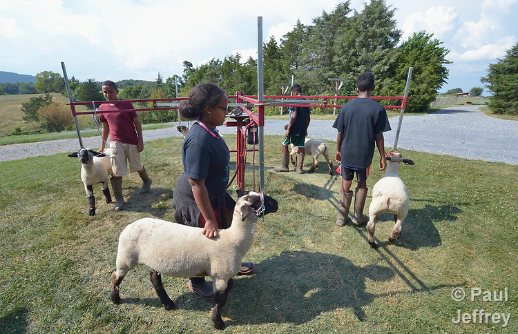 Sara Goitom, a resettled refugee from Eritrea, exercises her sheep on a farm in Linville, Virginia, on July 18, 2017. Goitom and other refugee youth, resettled in the area by Church World Service, are preparing to show sheep and goats in a county fair.<br /> <br /> Photo by Paul Jeffrey for Church World Service.