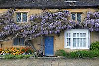United Kingdom, England, Worcestershire, Broadway: Wisteria clad cotswold cottage | Grossbritannien, England, Worcestershire, Broadway: Cottage mit bluehenden Glyzinien - auch Blauregen genannt