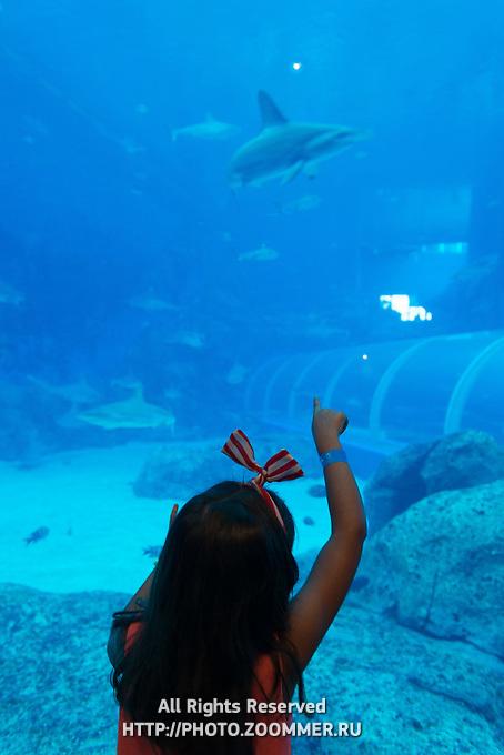 Little girl point to the shark in Sentosa Aquarium, Singapore