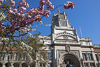 United Kingdom, England, London - Kensington: Victoria and Albert Museum with cherry blossom trees | Grossbritannien, England, Kensington im Westen Londons, Stadtbezirk Kensington and Chelsea: Victoria and Albert Museum zur Kirschbluete