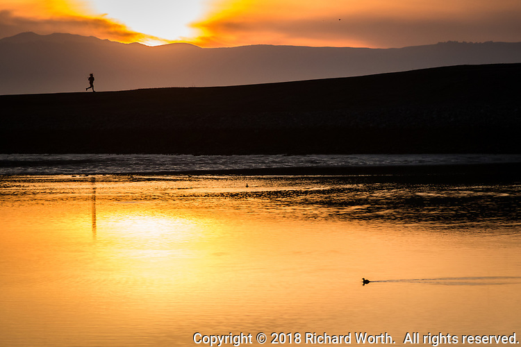 In motion, a lone runner under sunset.  In the foreground a lone bird paddles toward the reflected setting sun.