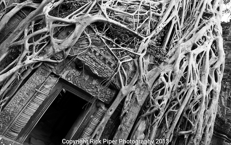 "Tomb Raider Tree 01 - Strangler fig and silk-cotton tree roots around the ""Tomb Raider"" doorway, Ta Prohm Temple, Angkor, Cambodia"