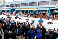 Larry Daughherty during the ceremonial start of the 2018 Iditarod in Anchorage, Alaska on Saturday, March 3, 2018.<br /> <br /> Photo by Jeff Schultz/SchultzPhoto.com  (C) 2018  ALL RIGHTS RESERVED