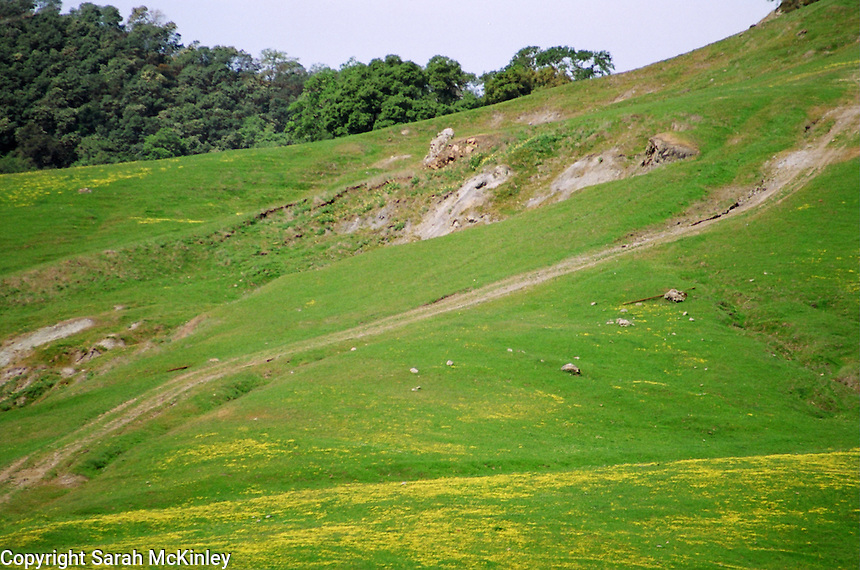 Yellow flowers on a green hill of southern Mendocino County in Northern Calfiornia.