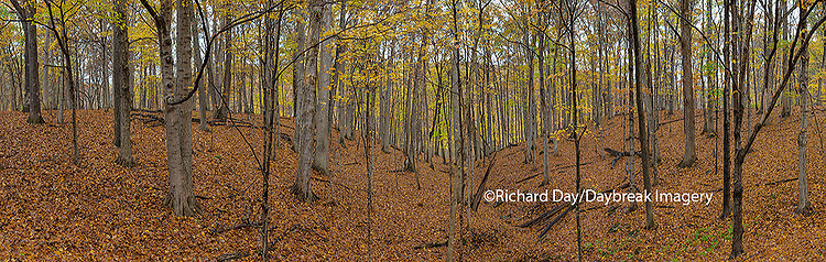 63895-14307 Trees in fall at Stephen A. Forbes State Park, Marion Co., IL