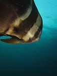 Green Island | A Diver's Paradise