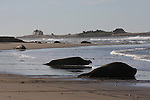 Ano Nuevo S.P.,  North Point.  Frank Balthis
