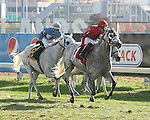 Harpoon #1 with Samuel Camacho, Jr. riding won the Gray Ghost Starter Handicap for Gray Thoroughbreds on Halloween, October 31, 2015 at the Monmouth Park at the Meadowlands All-Turf Meet in East Rutherford, New Jersey.  Second was #6 Hiram with Scott Spieth riding. Photo By Bill Denver/EQUI-PHOTO
