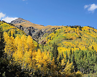 Fall Color in Colorado, Golden Aspens