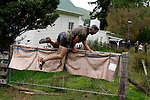 Hunterville, New Zealand - October 27, 2018 - A Shepherd jumps over a farm gate ahead of his dog in the annual Shemozzle obstacle race, that sees the canines and shepherds tackkle mudslides, ride in wheel barrows and carry bulls testicles. The annual Shemozzle race draws thousands every year to this town of less than 500 people. Picture: Giordano Stolley
