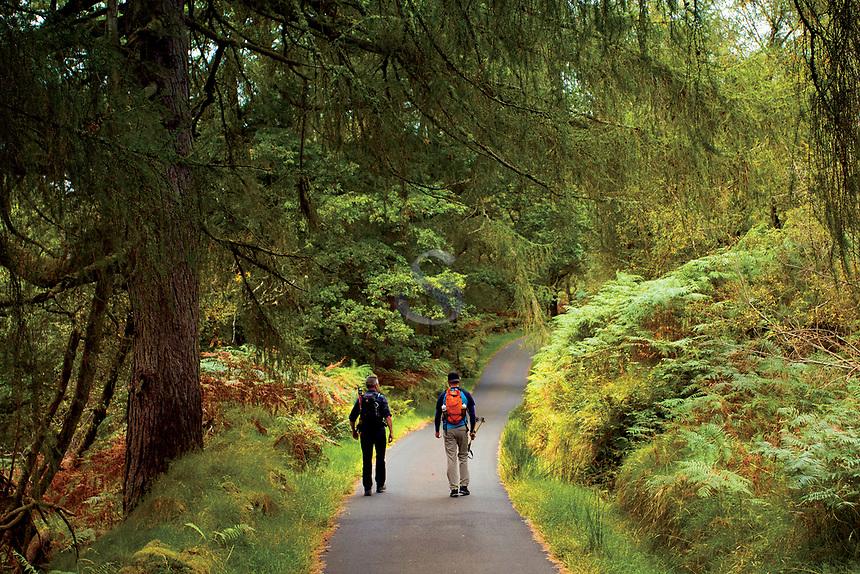 Walking through Glen Luss, Loch Lomond and the Trossachs National Park