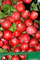 Radishes for sale at farmers market.
