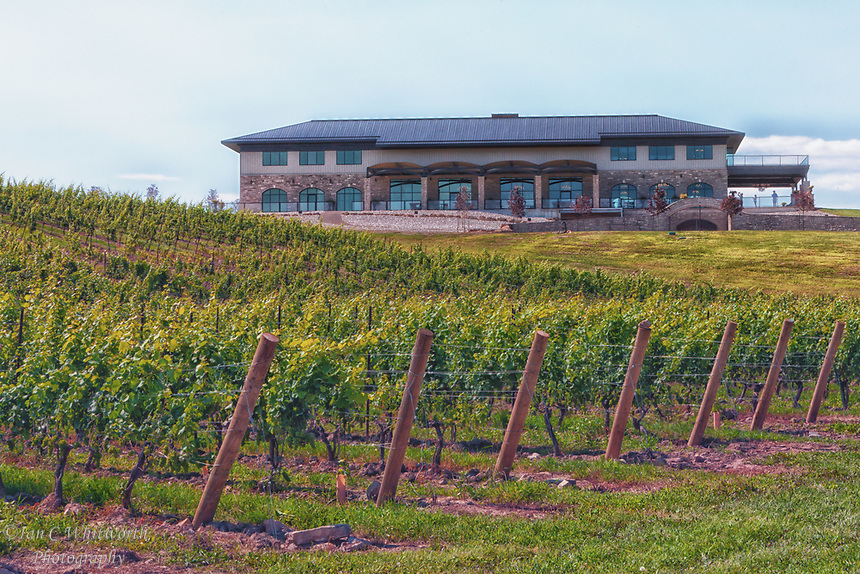 A view of the Megalomaniac Winery