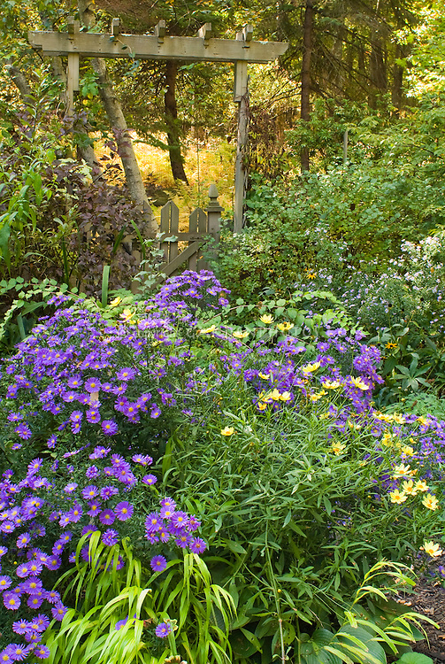 Fall Autumn Flower Garden In September Plant Flower