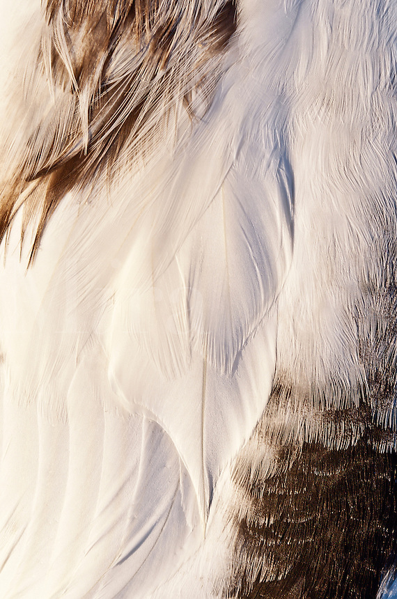 Bird feather detail.