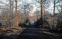 London: Hampstead Garden Suburb--the Big Wood.  Photo '90.