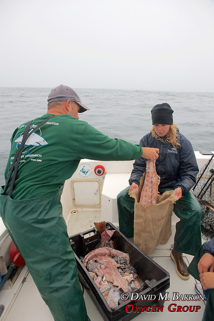 Sean & Stephanie Filling Burlap Bags With Bait For Sharks