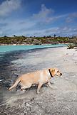 EXUMA, Bahamas. Ruby on the beach of Compass Cay.