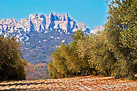A view Les Baux cliff village and rock mountain over an olive grove, Provence, Bouche du Rhone, France