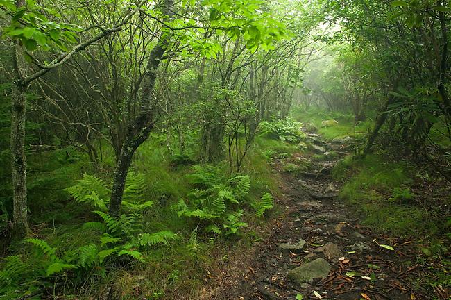 Summer along the Appalachain Trail, Unaka Mountains
