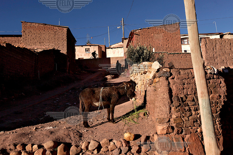 A donkey stands next to a wall in the town of Ocuri while a person passes on a bicyle on a road above. <br /> <br /> The people of Ocuri and surrounding communities carry on the pre-Columbian tradition of ritual fighting. The communities gather on the plaza of Ocuri to fight and dance in competition with each other. The blood that is spilled is an offering to Mother Earth. In return, the people ask for rain and a good harvest. This ritual is called tinku or fiesta de la cruz since the cross is also engaged in the festivities. The cross is dressed up, given offerings and brought from communities around Ocuri to the church in town. This syncretic festival melds pagan, pre-christian rituals with Catholic practice. /Felix Features