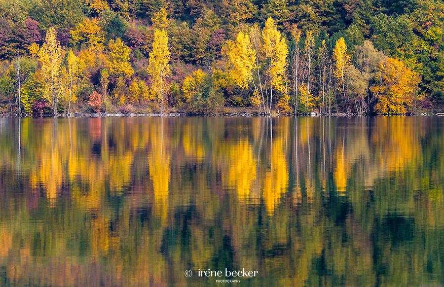 Riverbank of Drina, Tara National Park, Serbia.