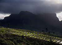 June 13th, 2004_ Ossu, Timor-Leste_ A patch of sunlight highlights rice terraces near Laritame in the Viqueque District, with Mt. Laritan darkened by clouds in the background.  Photograph by Daniel J. Groshong/Tayo Photo Group