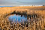 """Reed grass at lagoon """"Etang du Vaccares"""", Camargue, France"""